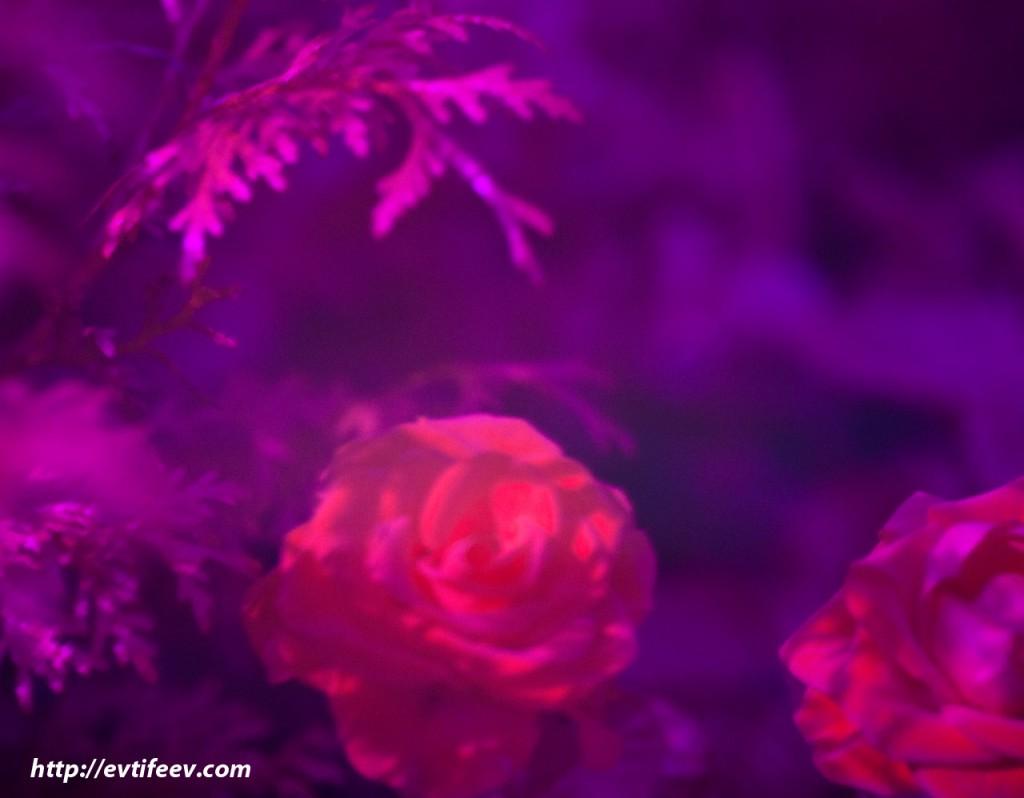 Ультрафиолетовая фотография - практика, примеры