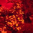 Инфракрасная фотография— практика, примеры. Ссылка на то, как модифицировать камеру