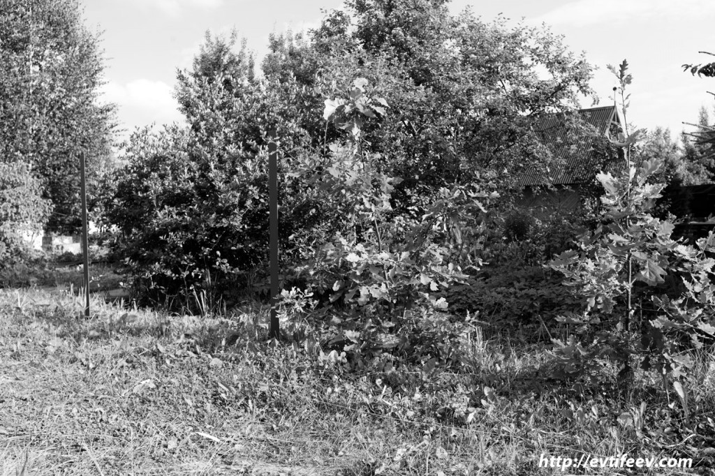 Инфракрасная фотография - практика, примеры