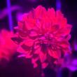 Ультрафиолетовая фотография— практика, примеры