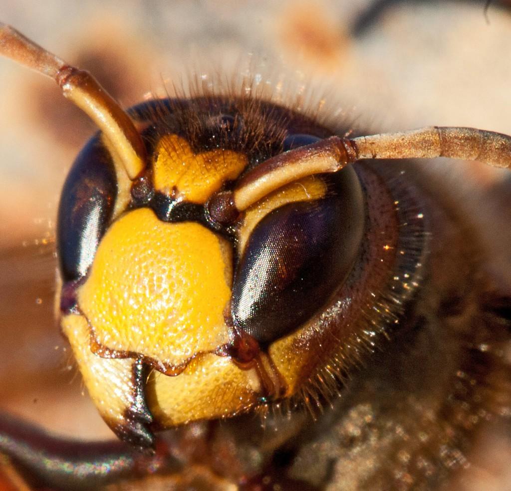 Еще немного о макросъемке (нумизматика, насекомые и проч.)