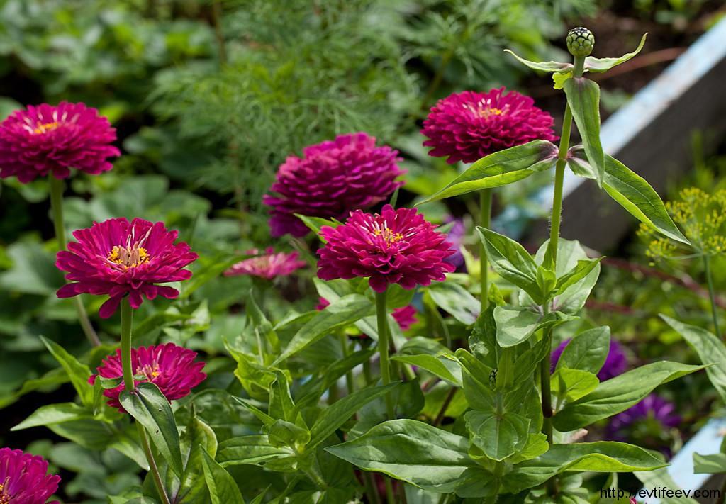 Немного фотографий цветов в память об уходящем лете