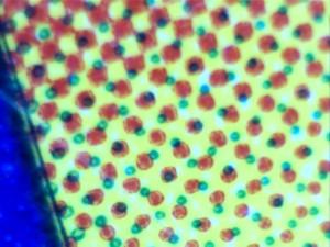 Портативные микроскопы и фотография