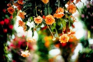 Фото-канал пользователя Moaan (гуру боке / bokeh)