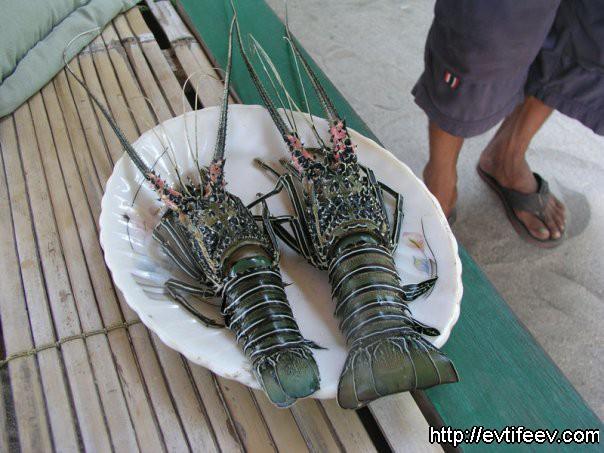 Лобстеры, Индонезия. пока еще не варёные, свежие