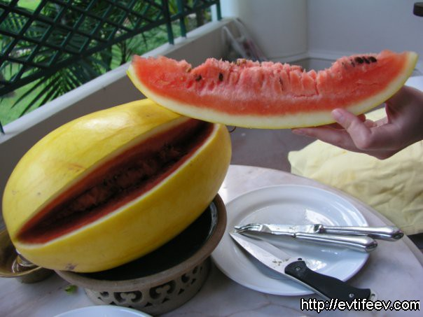 малайский арбуз