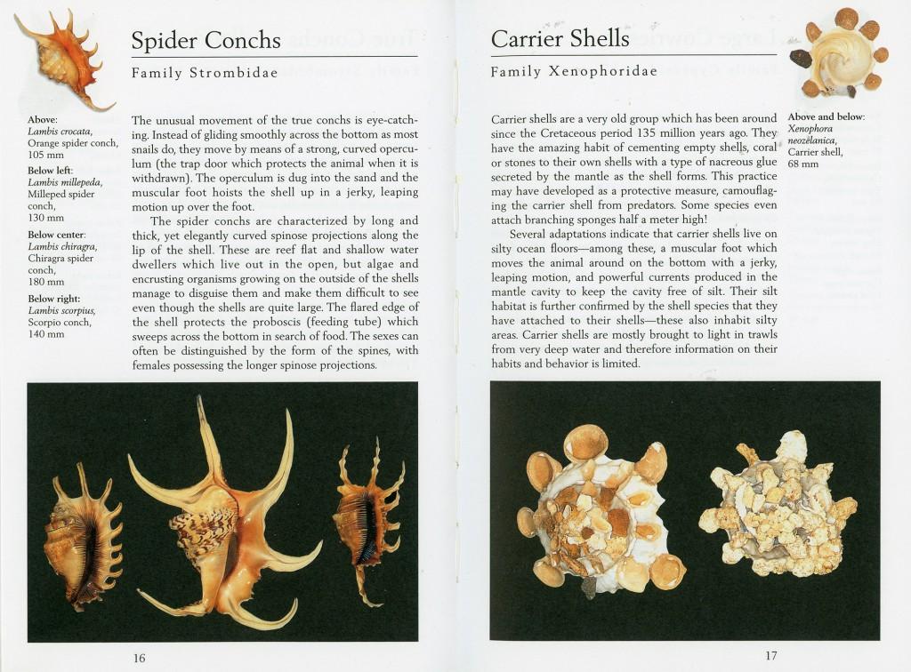 Фото и описание большинства встречающихся в тёплых морях и океанах ракушек