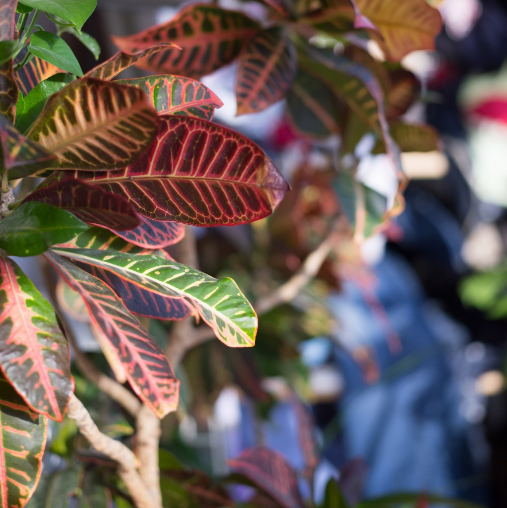 Прогулки со среднеформатной камерой Mamiya DF+ и цифровым задником Leaf Credo 40