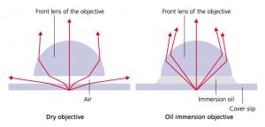Дополнение: каким образом иммерсионная жидкость концентрирует световые лучи