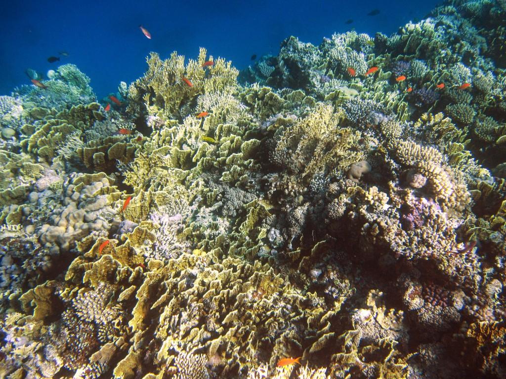 Подводная фотосъемка в Египте