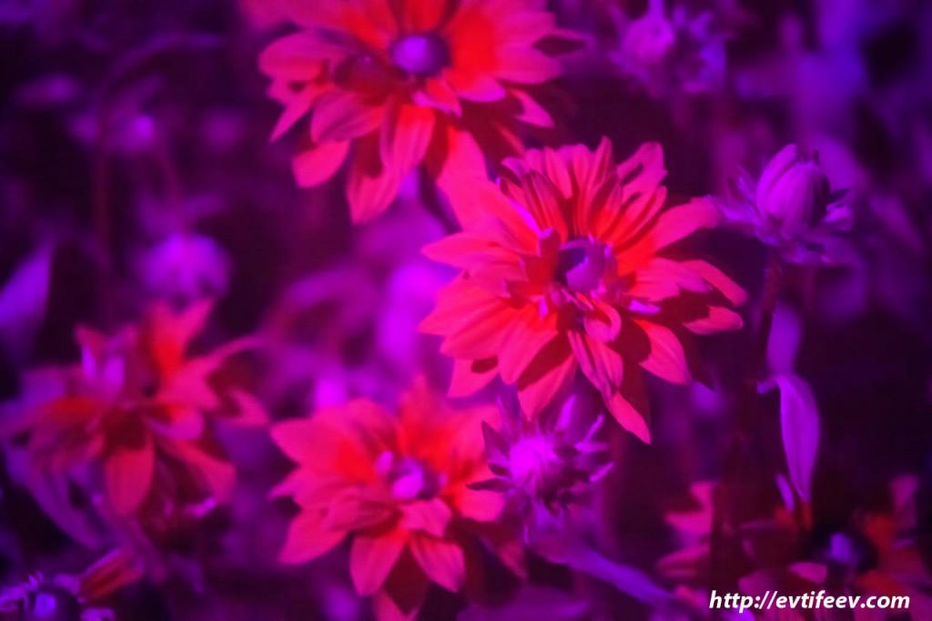 ультрафиолетовая фотография