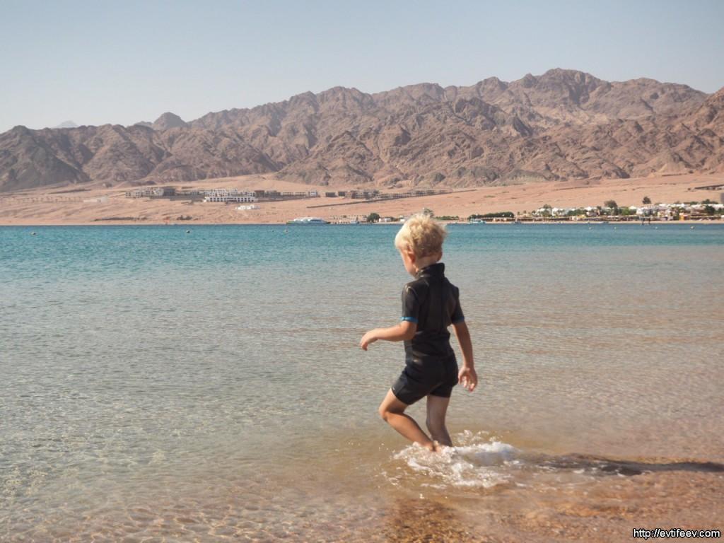 впечатления от поездки в Египет