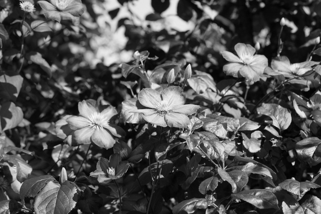 Инфракрасная фотосъемка ч.2